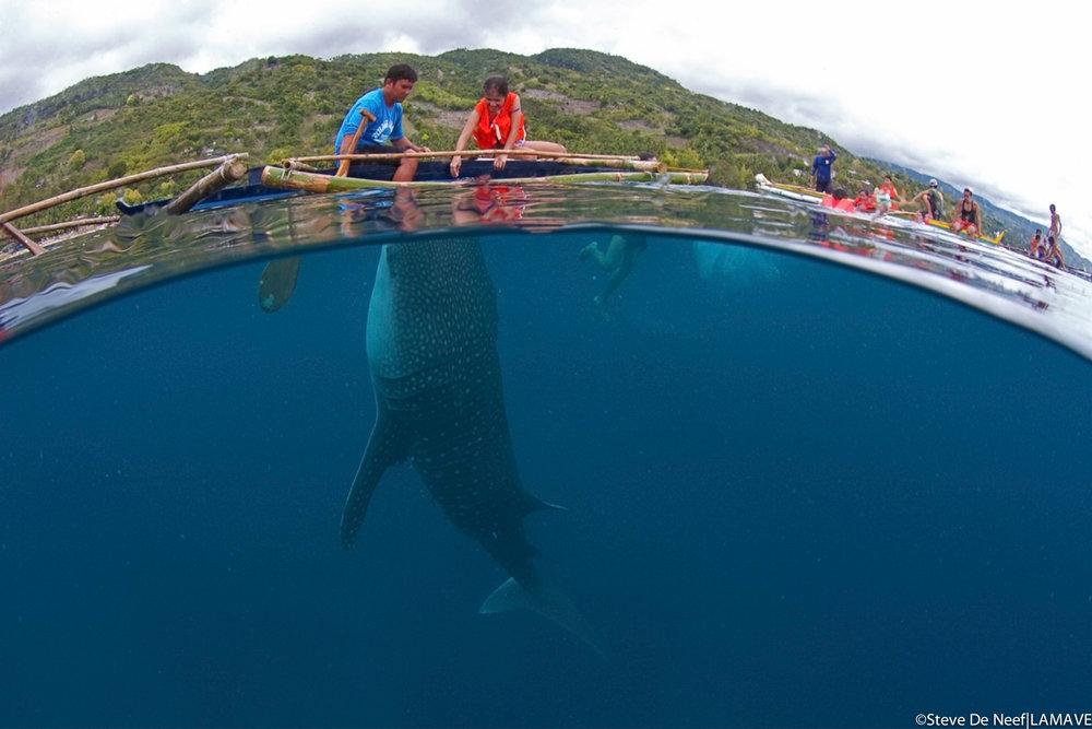 whale-shark-oslob-cebu-philippines-lamave.jpg