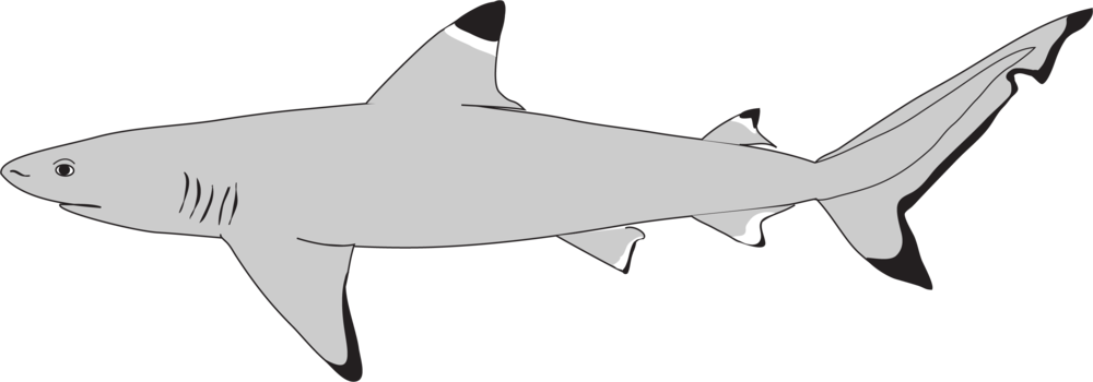 shark_icon.png