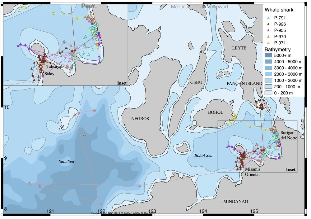 Satellite tracks of whale sharks tagged in Southern Leyte and Mindanao, Philippines.