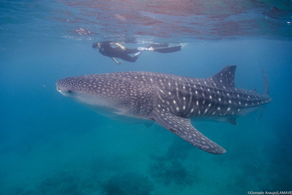 SOUTHERN LEYTE WHALE SHARK PROJECT -