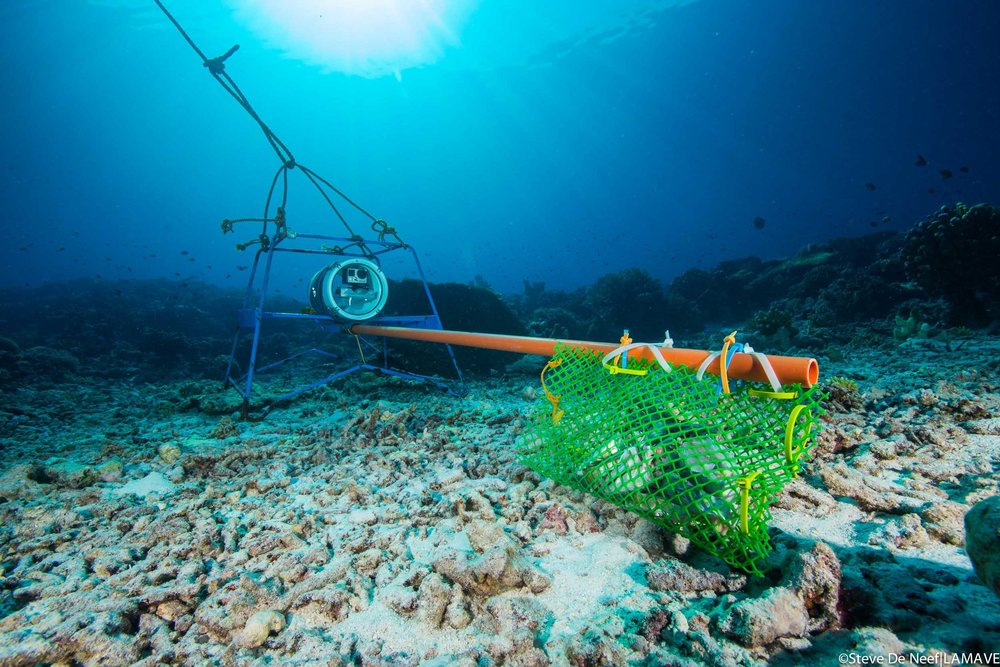 Photo 5. A BRUV system deployed in the park awaits sharks and rays. Credit: Steve De Neef|LAMAVE