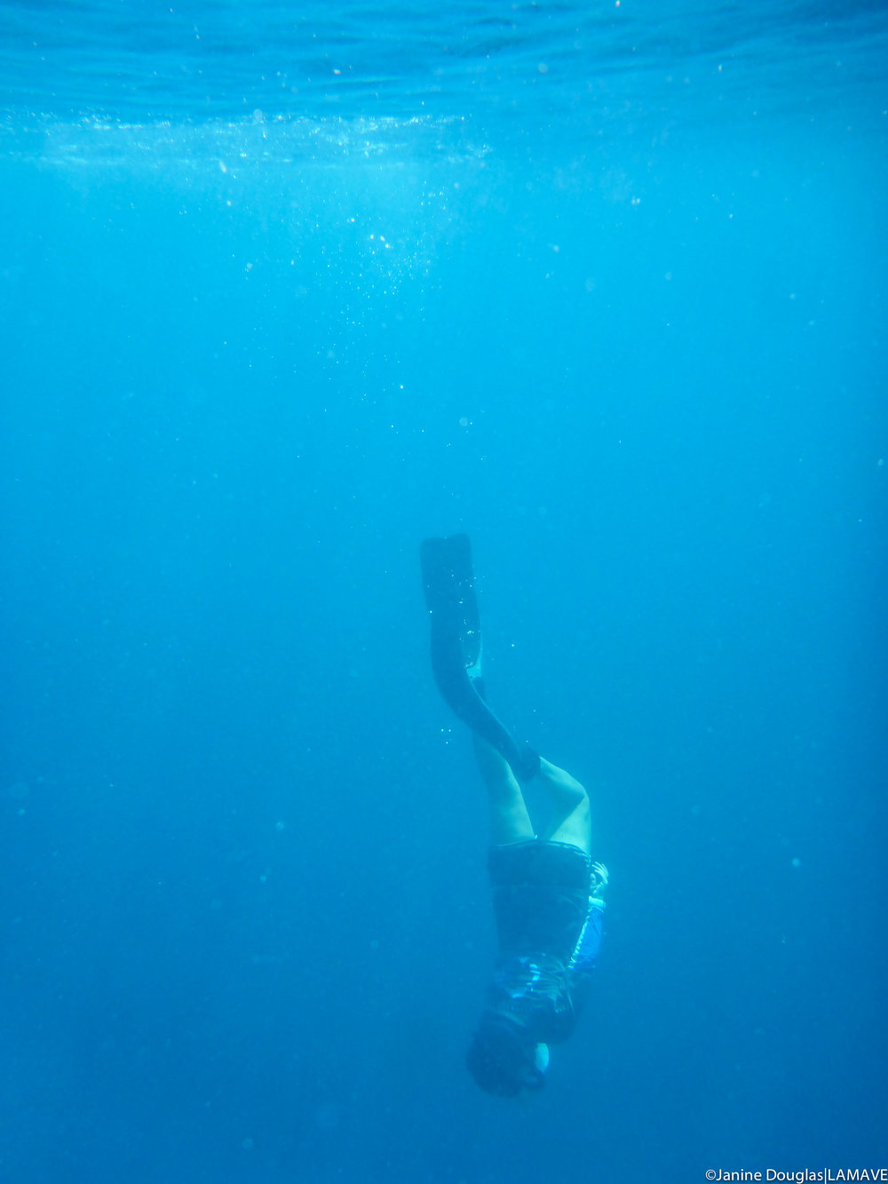 Janine freediving for whale shark IDs.
