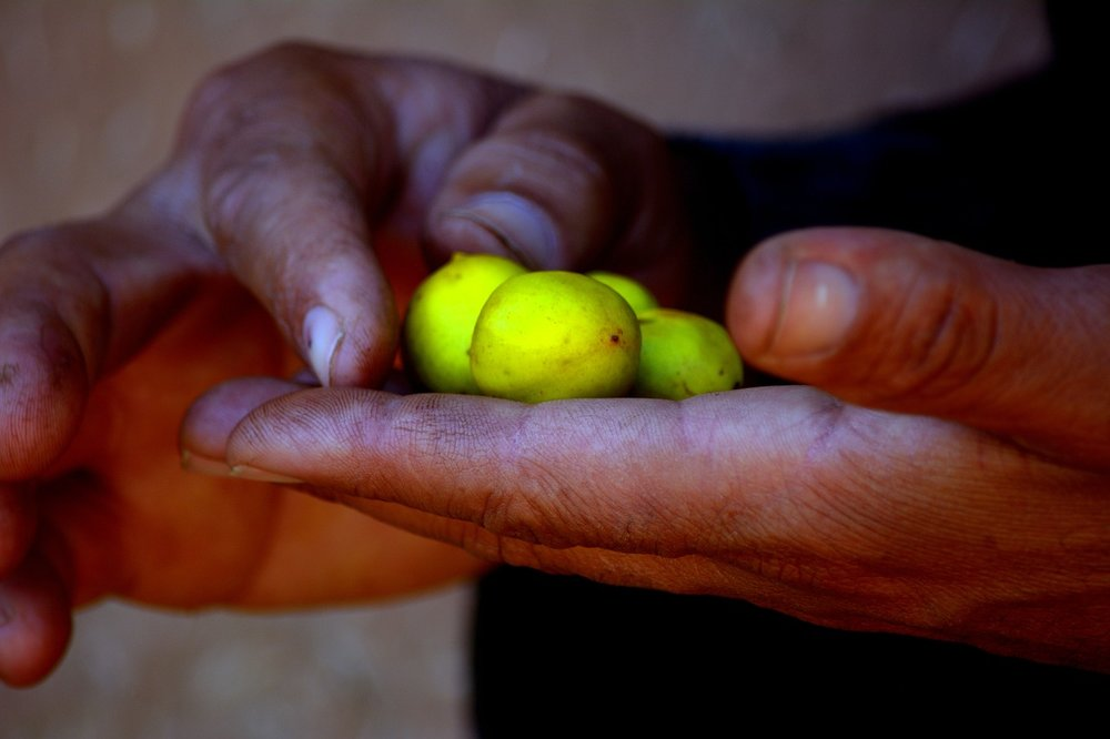 Our Argan Oil - Our formula contains Argan Oil for its astonishing healing, conditioning, and anti-aging properties and is sustainably harvested, then cold-pressed by women in Fair Trade Cooperatives. Many Argan oils on the market are diluted or produced using heating processes that compromise the quality of the oil. At Paradox, we use only 100% fair trade organic Argan oil that's the best possible quality and loaded with Vitamin E and essential fatty acids.