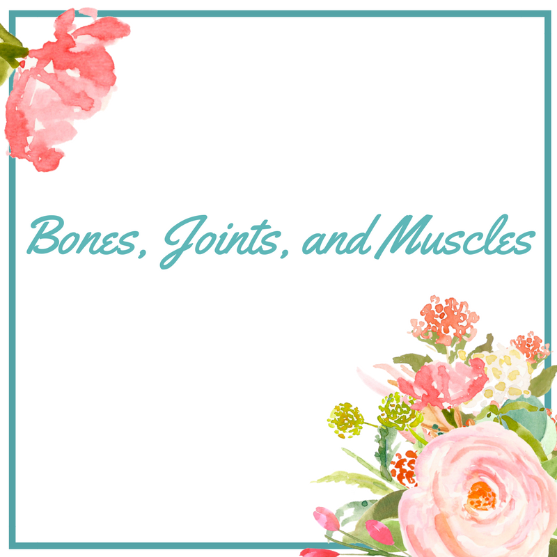 Bones, Joints, and Muscles.png