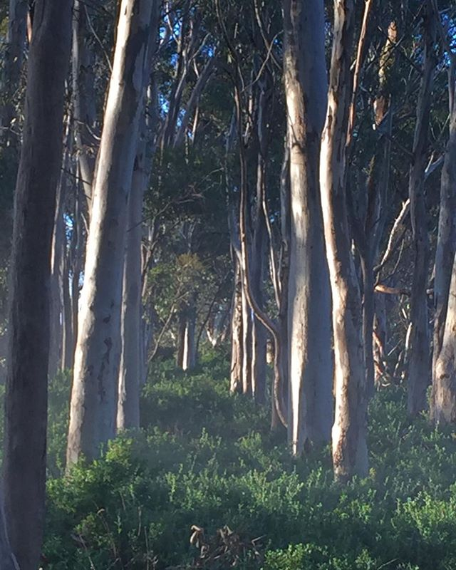 More ghost gums #Australianlandscapes