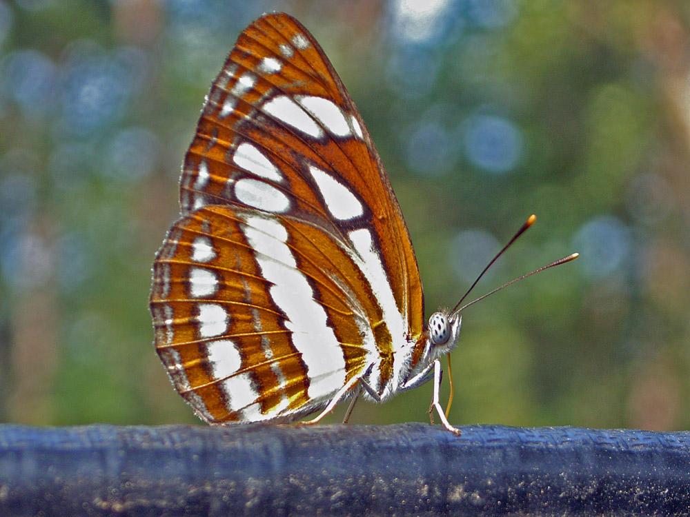 026 butterfly.jpg