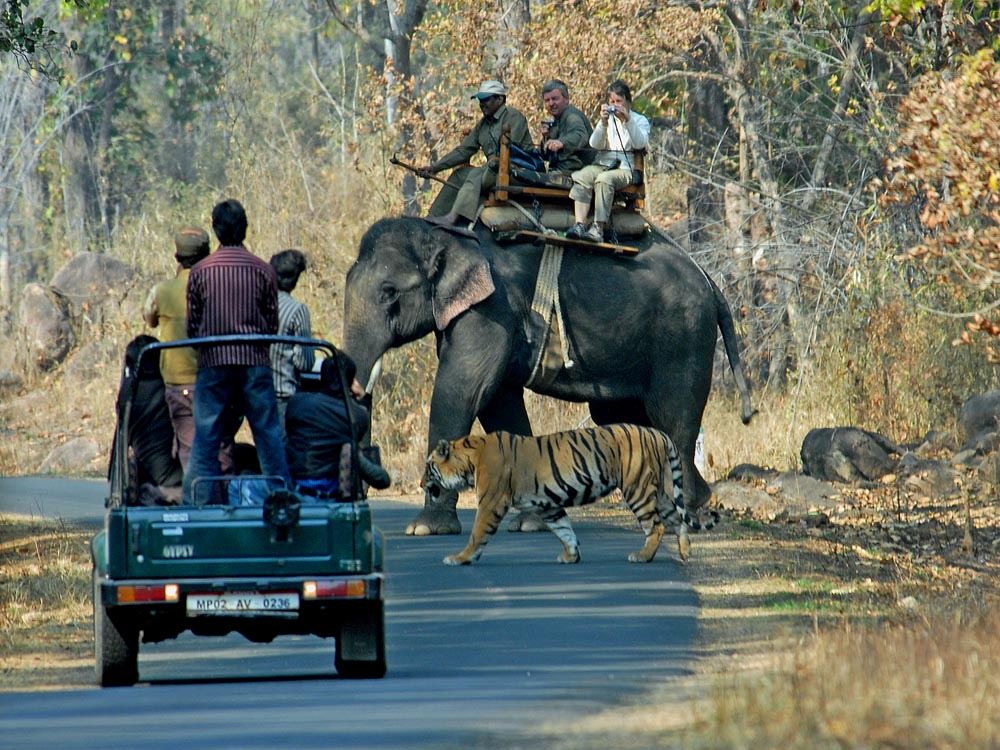 004 tiger with jeep and elephant.jpg