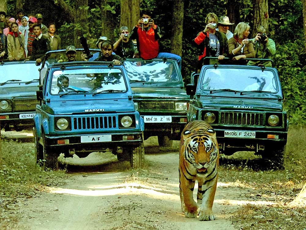 032 tiger with tourists.jpg