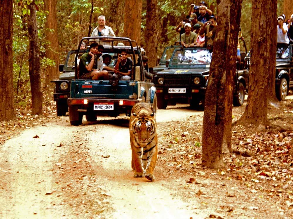 059 tigers & tourists.jpg