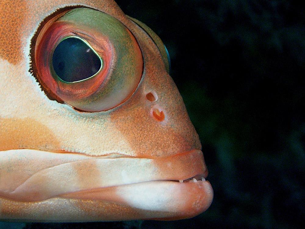 006 grouper - thailand.jpg