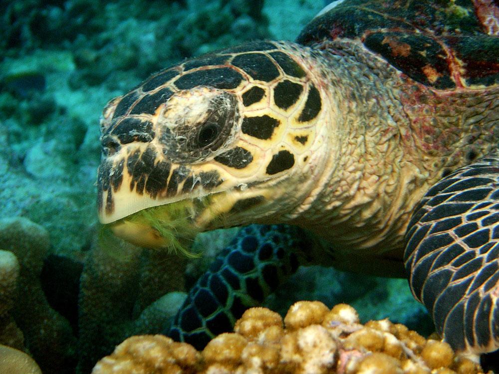 027 turtle - thailand.jpg
