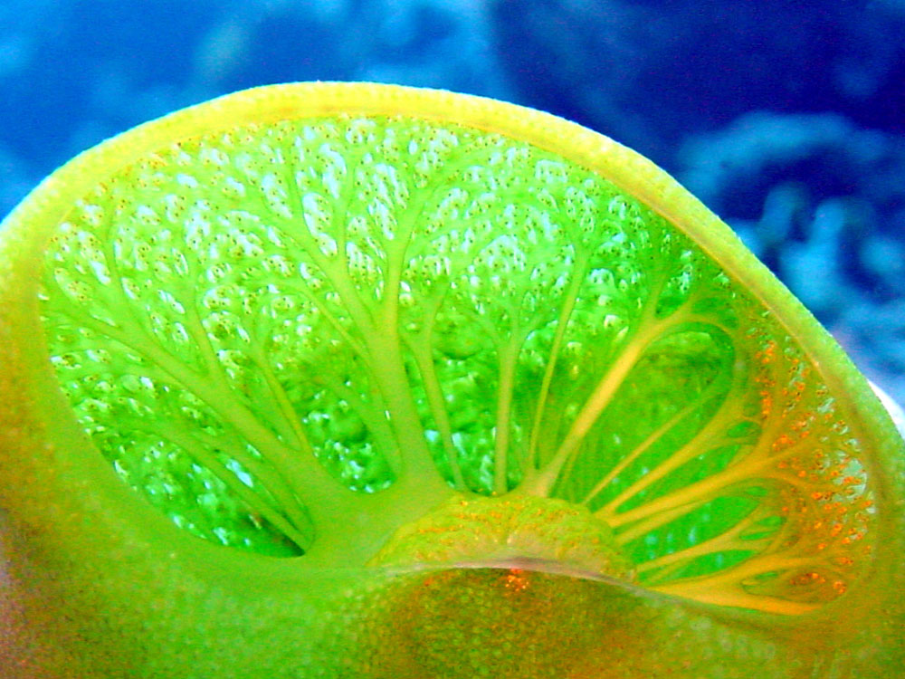 053 sea squirt - alor, indonesia.jpg