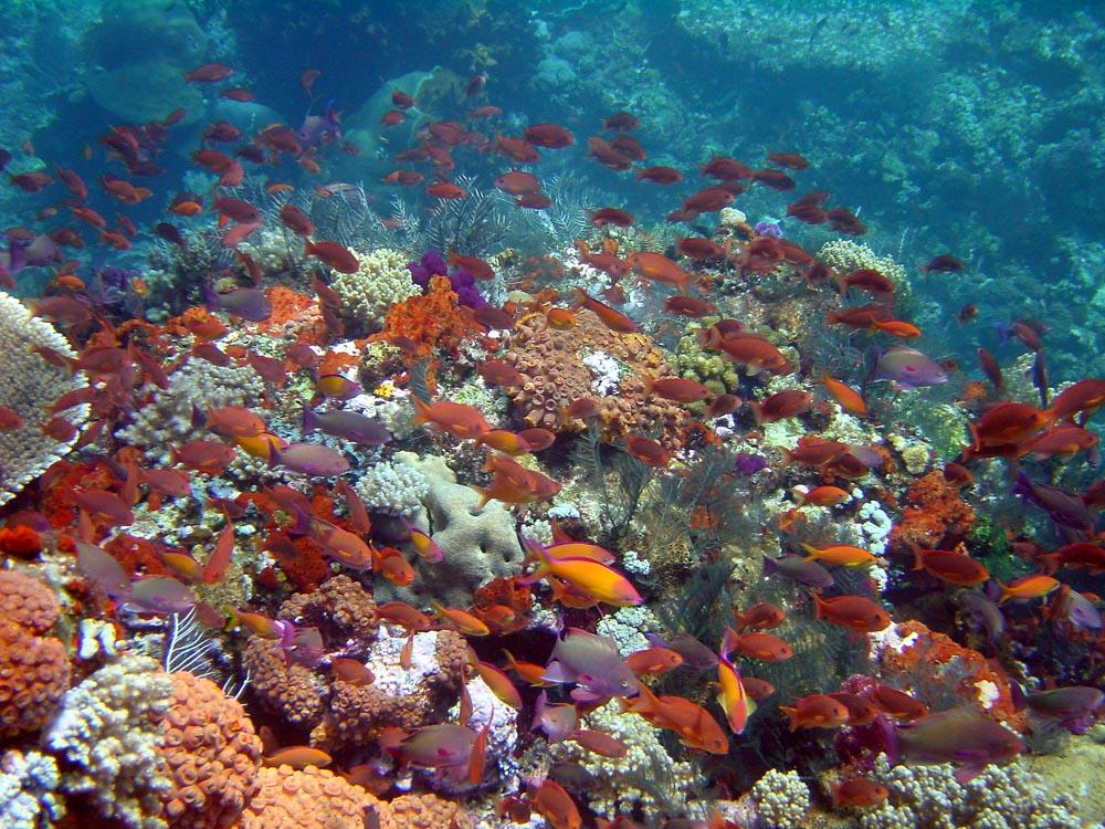 062 reef scene - komodo, indonesia.jpg