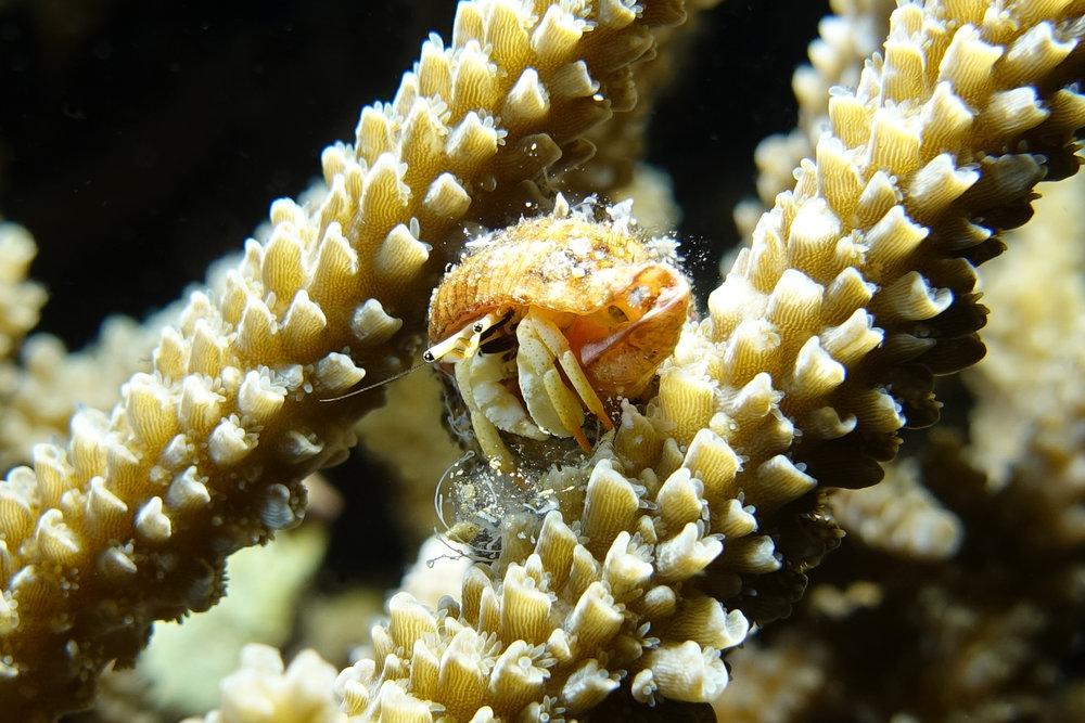 crab 1637.jpg