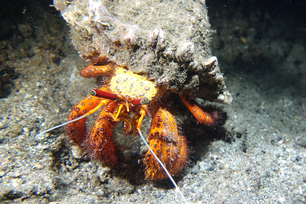 crab 719.jpg