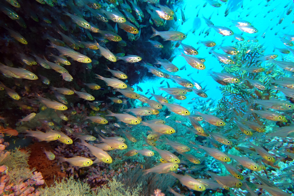glassfish 1531.jpg