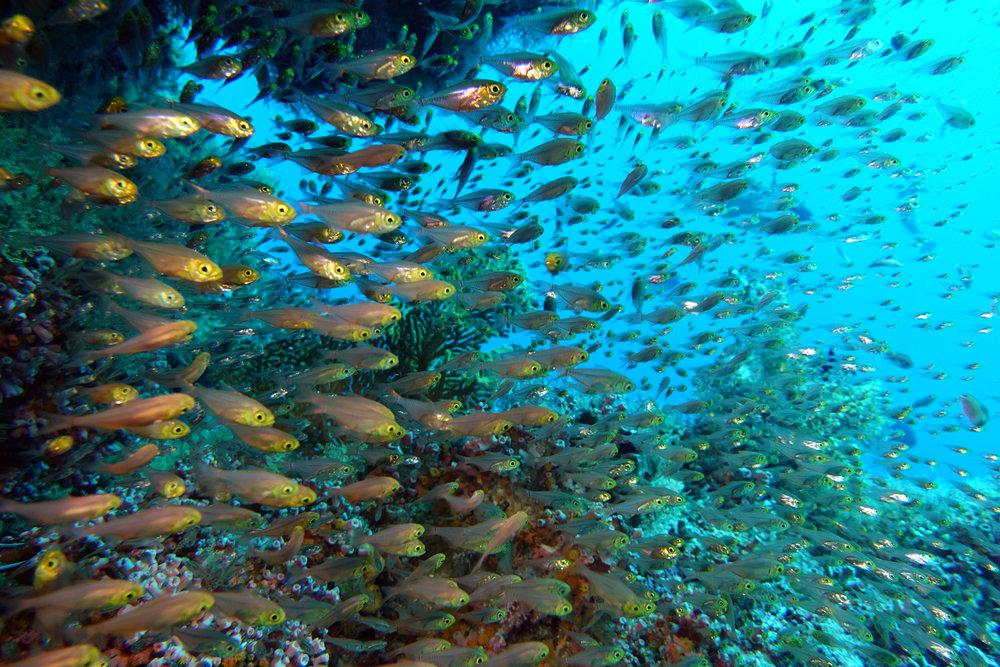 glassfish.jpg
