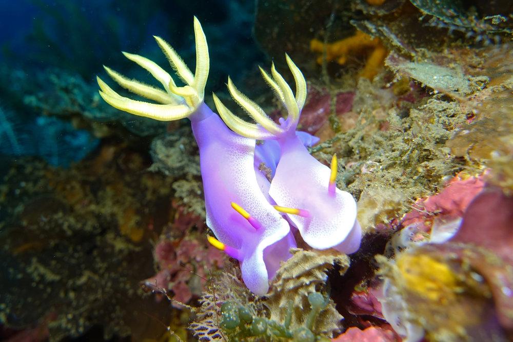 nudibranch 2058.jpg