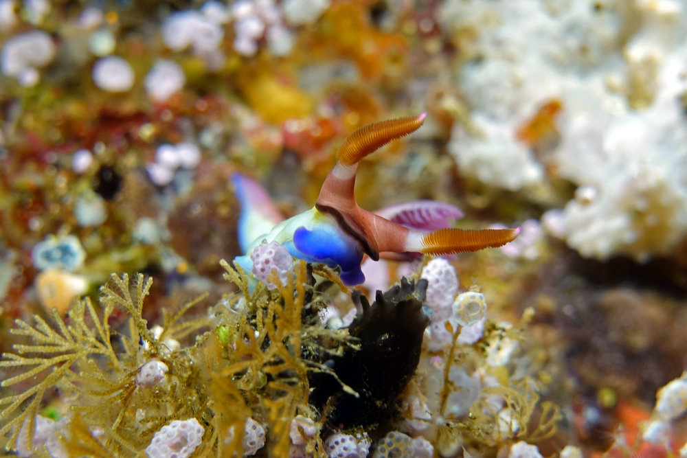 nudibranch 2388.jpg