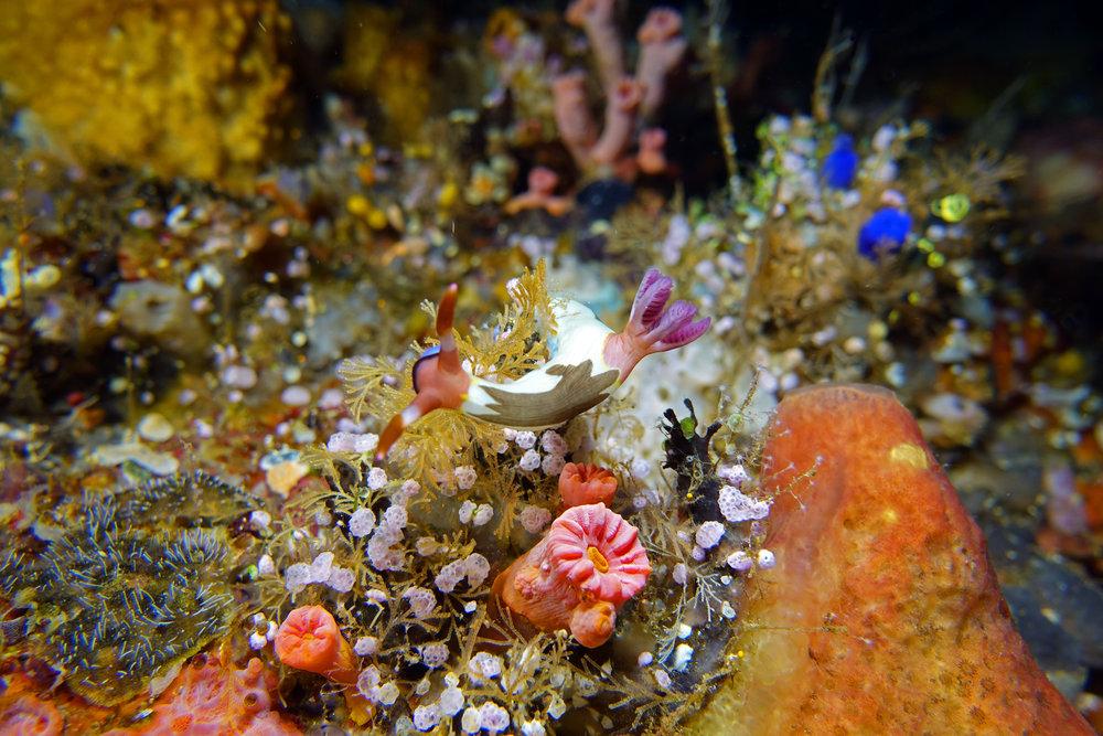 nudibranch 2391.jpg