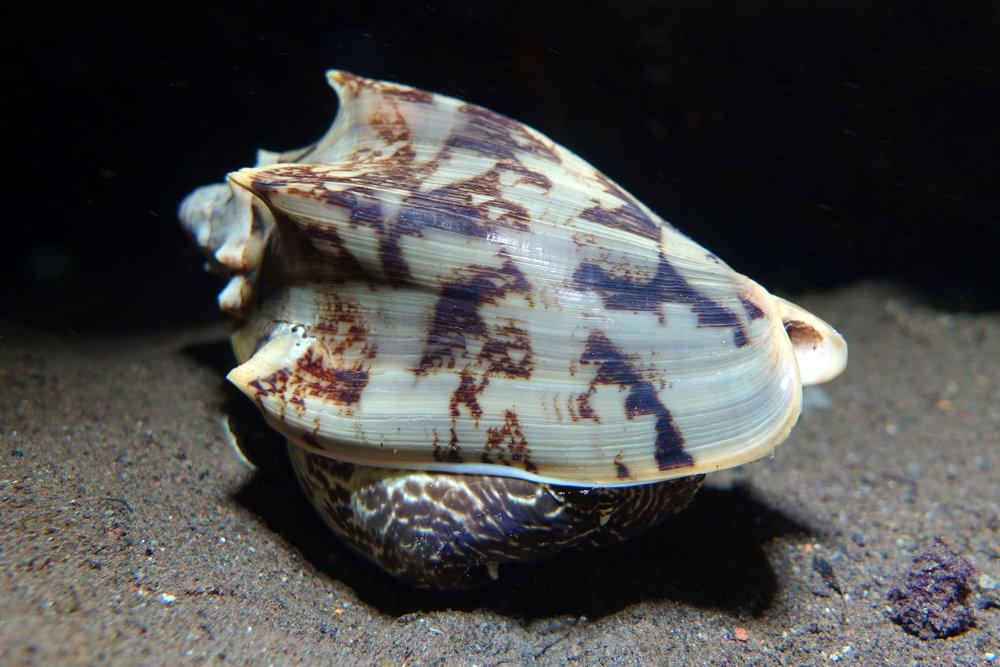 shell 2027.jpg