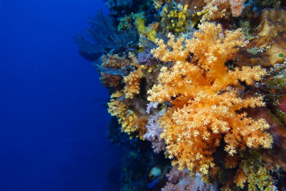 soft coral & blue 944.jpg