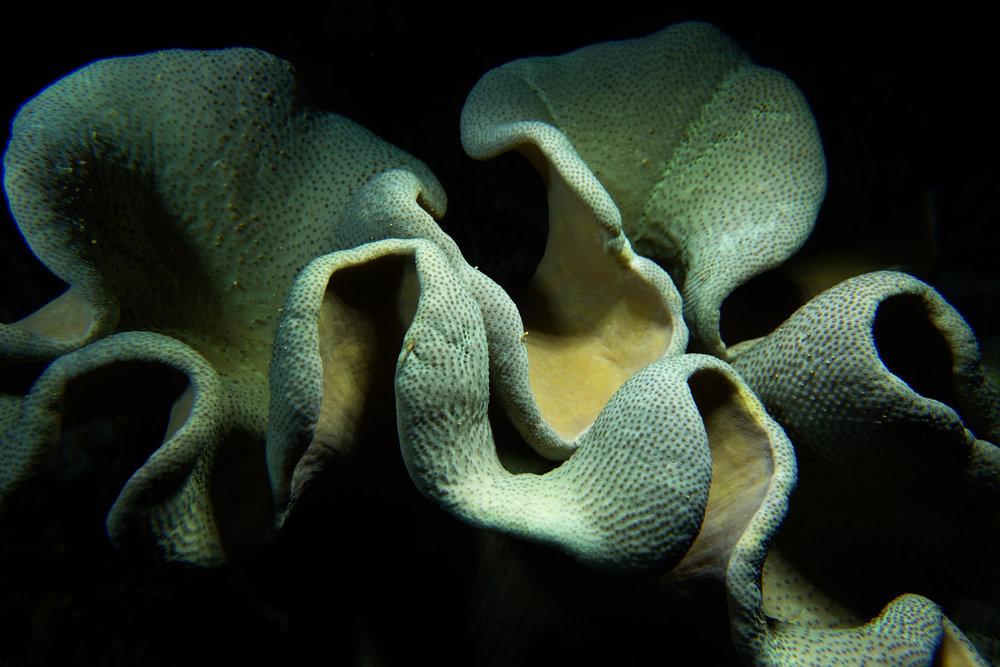 sponge at night 1085.jpg