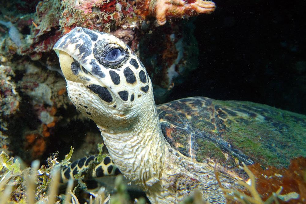 turtle 1420.jpg