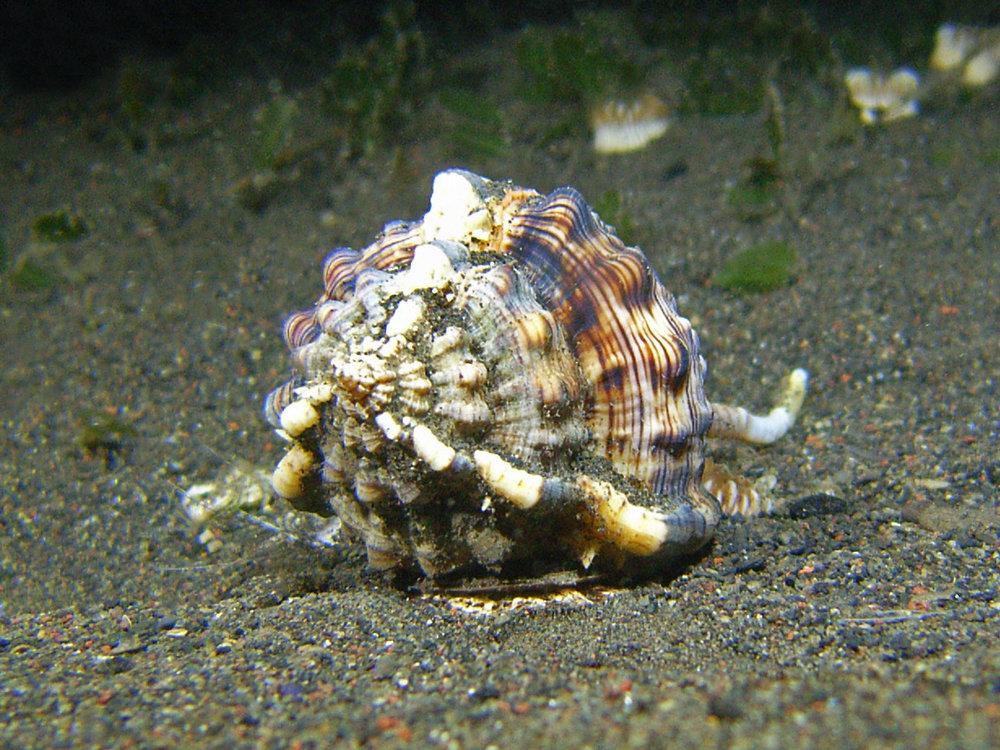 shell 1.jpg