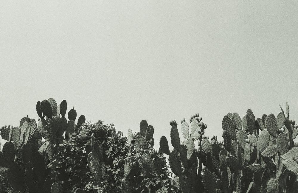 4 cactus.jpg