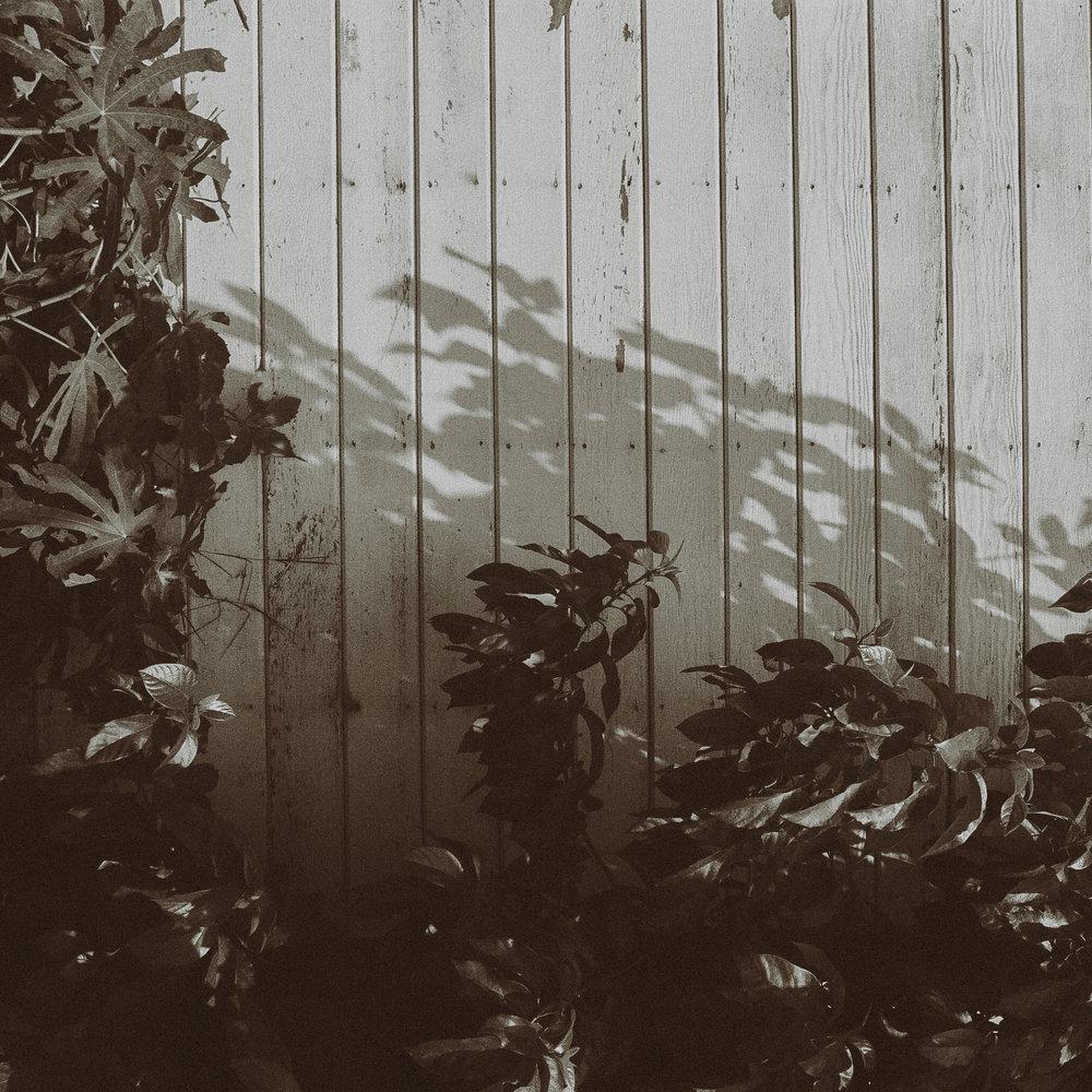 12 leaves.jpg