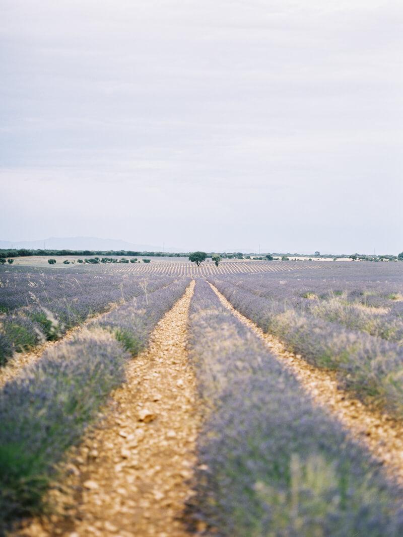 fine-art-lavender-fields-wedding-inspiration-8.jpg