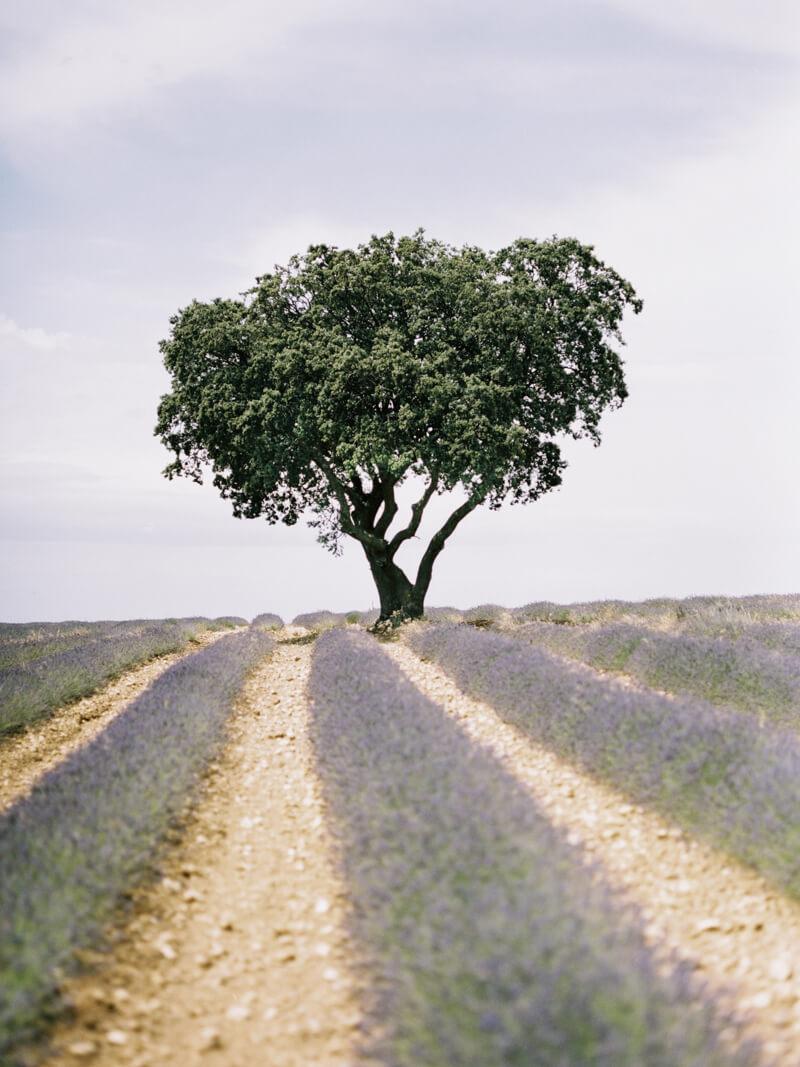 fine-art-lavender-fields-wedding-inspiration.jpg