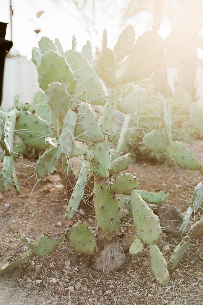 desert-botanical-garden-wedding-phoenix-az_-min.jpg