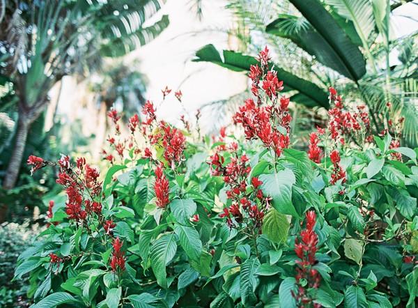florida engagement photos