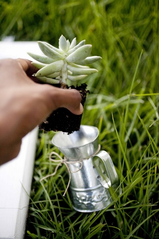 eco-friendly-do-it-yourself-succulent-wedding-favor-7.jpg