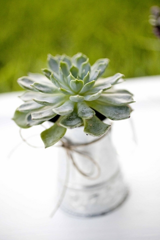 eco-friendly-do-it-yourself-succulent-wedding-favor-8.jpg