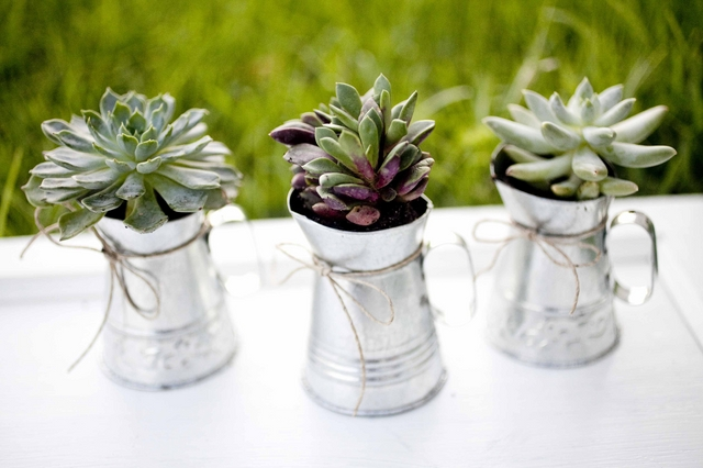 eco-friendly-do-it-yourself-succulent-wedding-favor-9.jpg