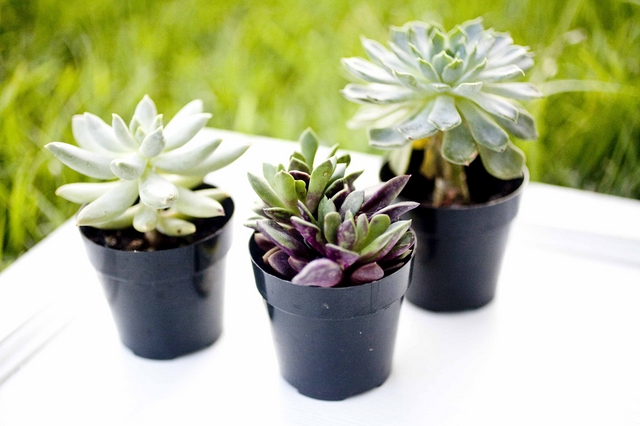 eco-friendly-do-it-yourself-succulent-wedding-favor.jpg