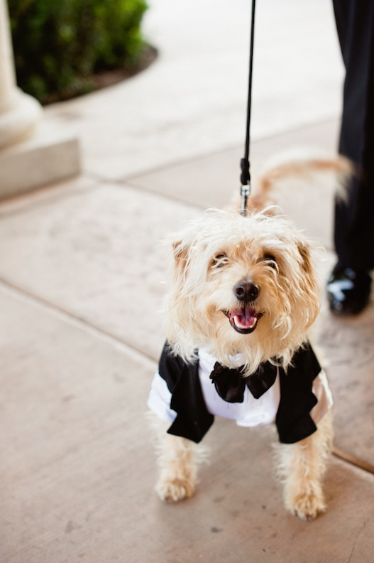 Dog-Ring-Bearer-Rock-N-Roll-Wedding.jpg