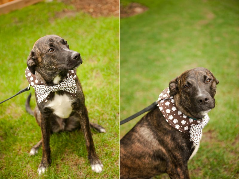 Your Dog As The Ring Bearer Trendy Bride Fine Art Wedding Blog