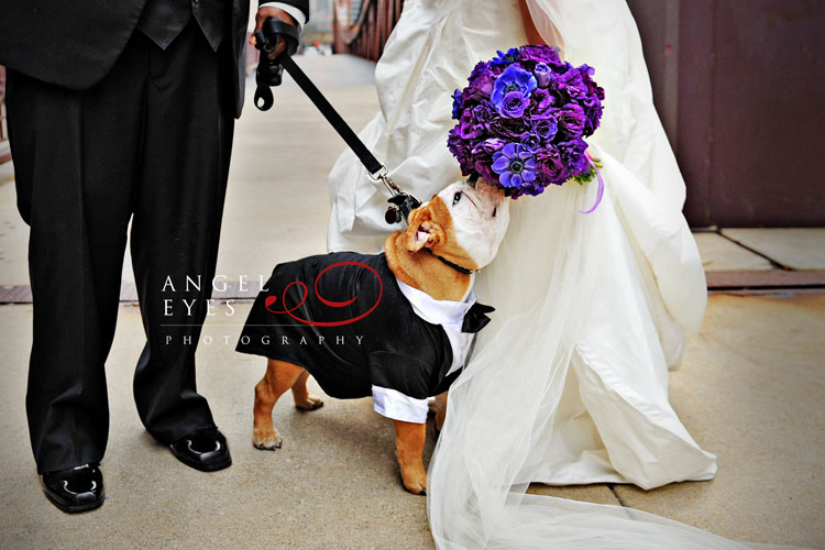 four-legged-ring-bearer-in-a-doggie-tuxedo-purple-flowers-bridal-bouquet-dog-in-the-wedding-party-puppy-love-cute-bride-and-groom-with-pet.jpg