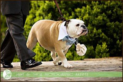 Your Dog As The Ring Bearer Trendy Bride Fine Art Wedding Blog