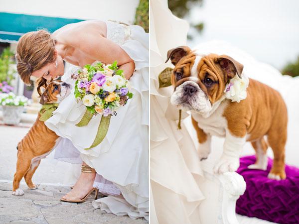 pet-in-wedding-with-bride.jpg