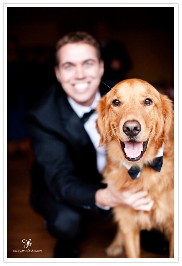 ring-bearer-dog.jpg