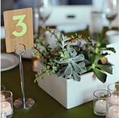 succulent wedding centerpiece