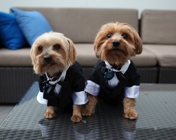 dogs in wedding party