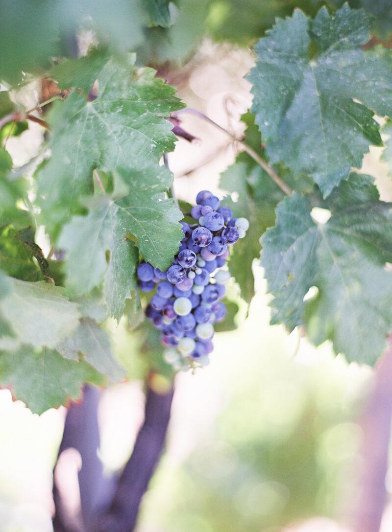 temecula-winery-wedding-california-fine-art-9.jpg