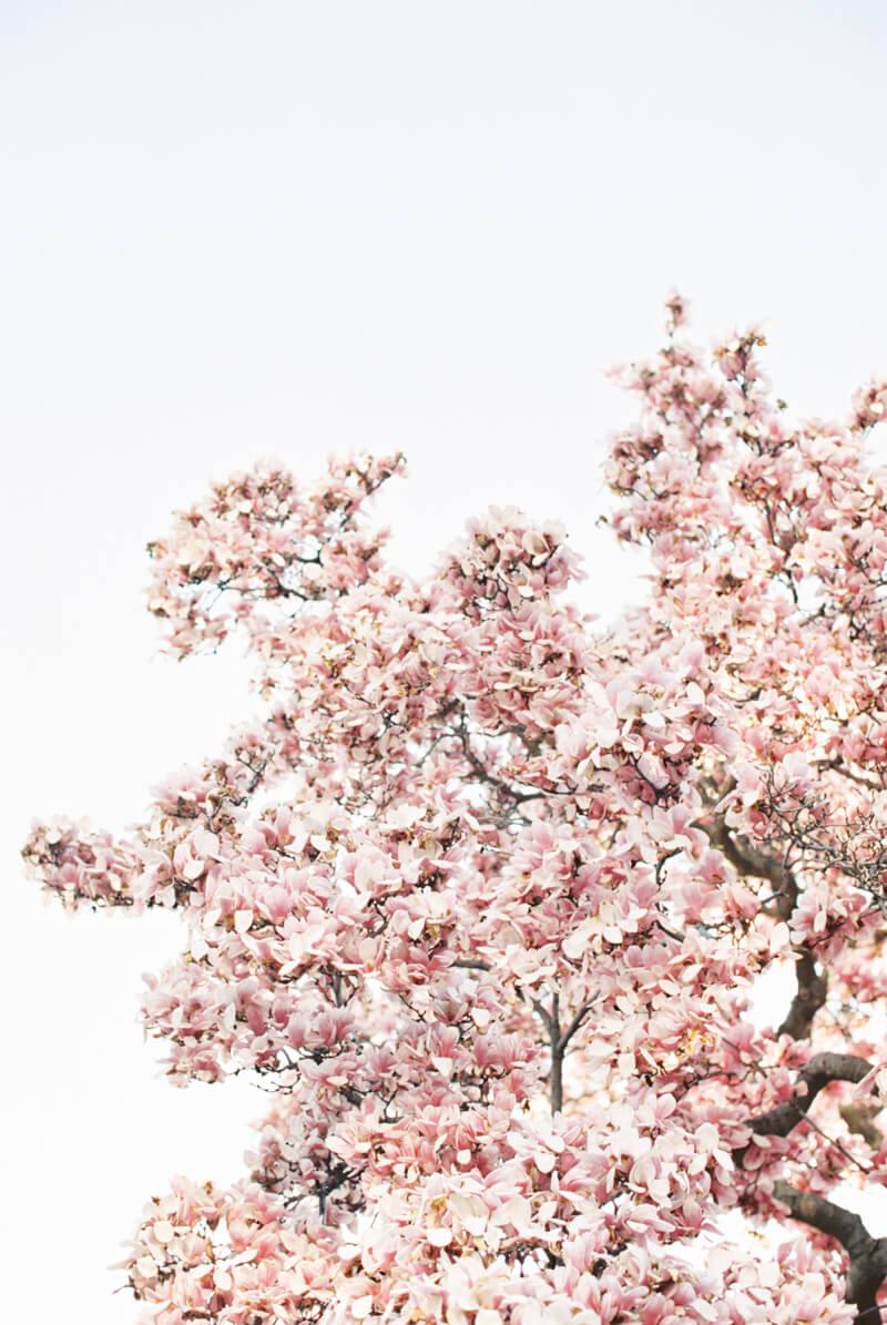 cherry-blossom-engagement-photos-fine-art-2.jpg