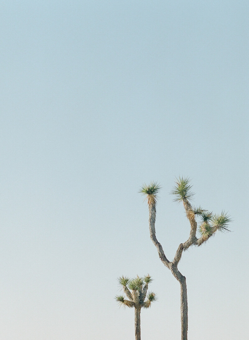 whimsical-joshua-tree-engagement-24.jpg